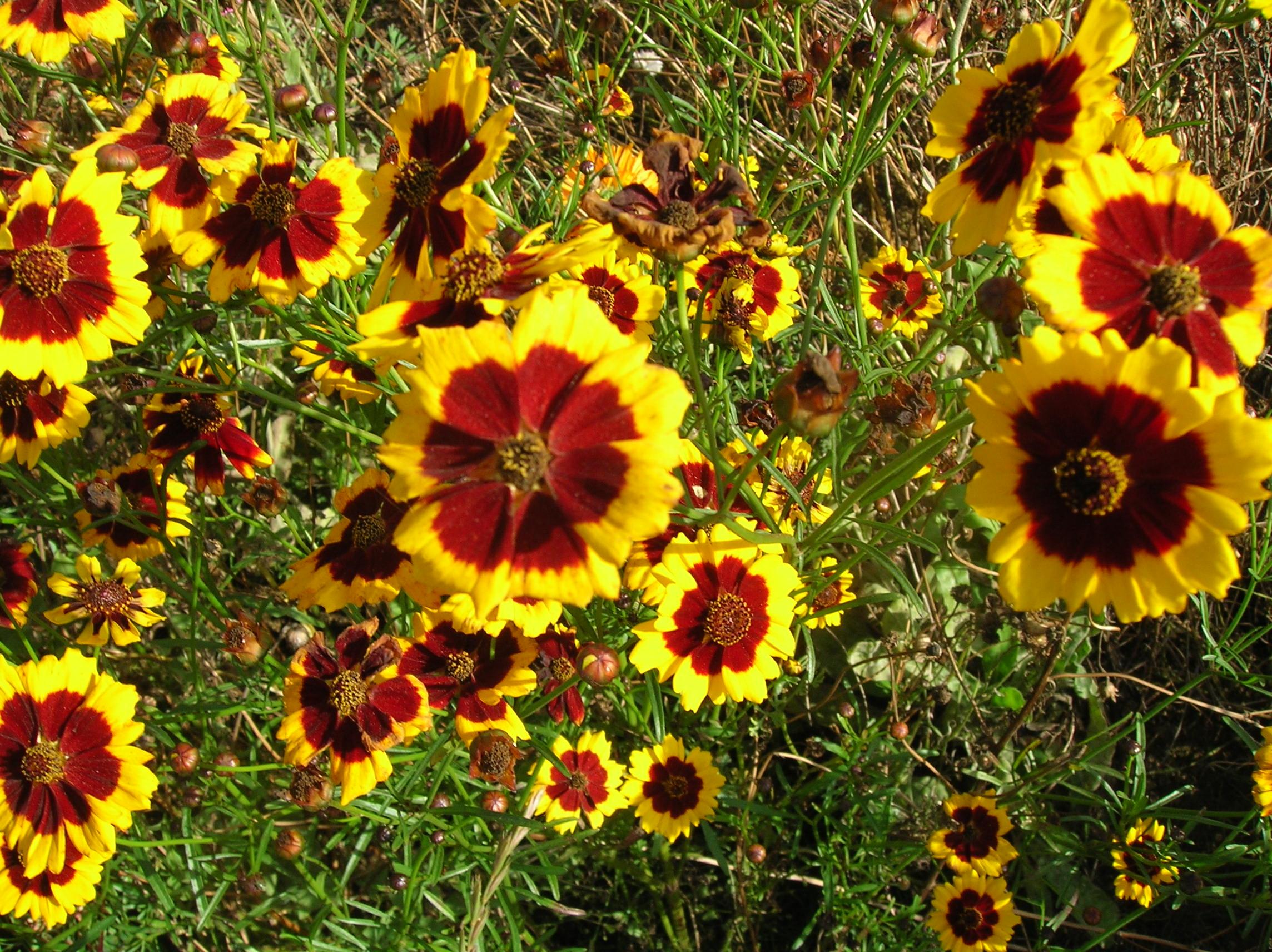 цветы каталог с графиями